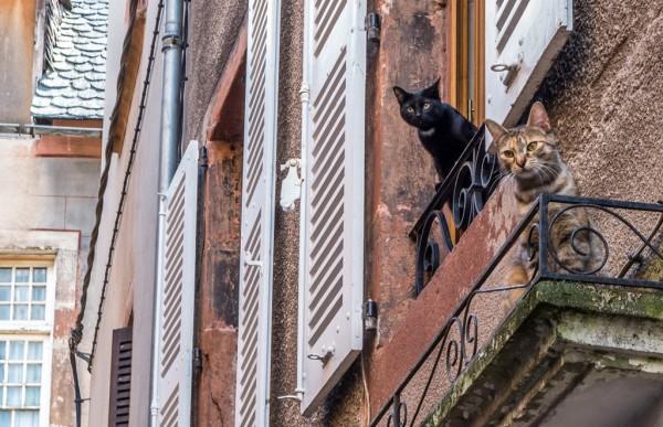 Les Chats au balcon - Daniel Orts
