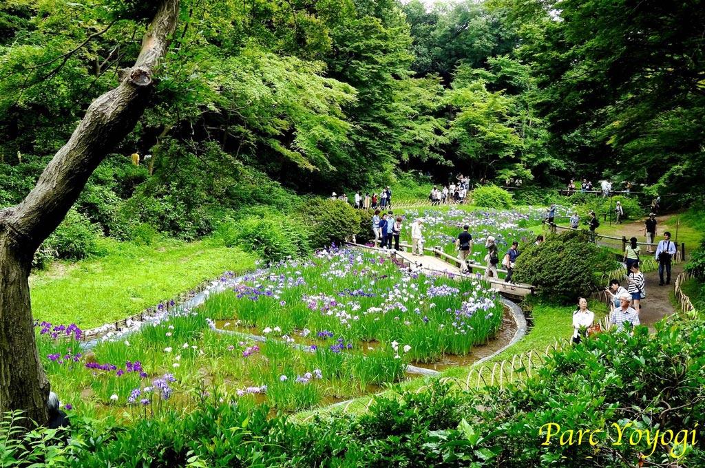 Parc Yoyogi - Photo Japon