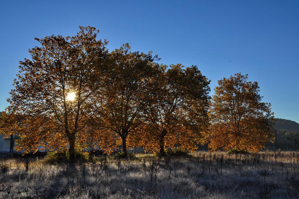 A travers les arbres